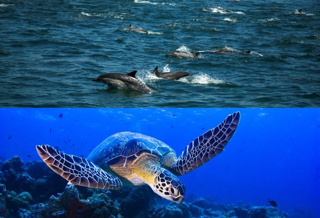 oman muscat swim